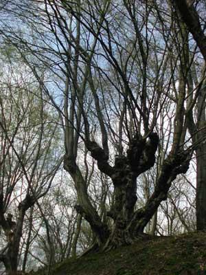 Groeten uit Geulle: Het Geulse Bos